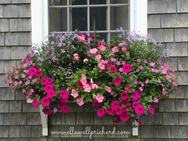 Darling St. window box
